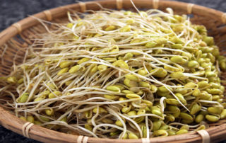 What are Sprouts & their Types