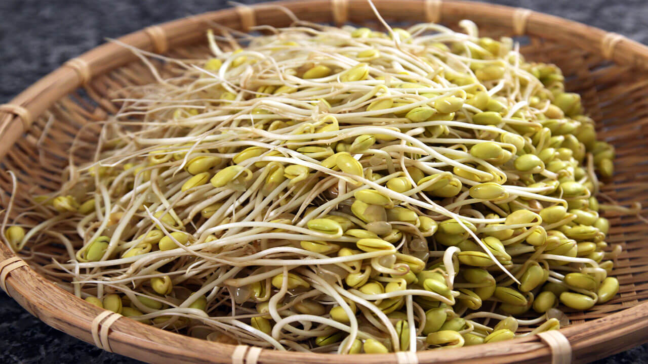 soybean sprouts